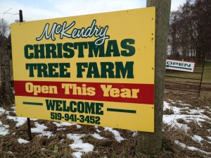Day 209 of 365 - McKendry Christmas Tree Farm