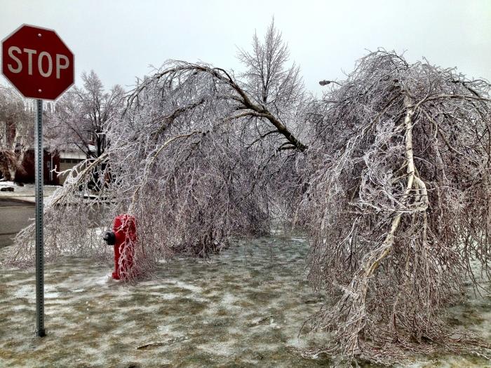 Orangeville Ice Storm